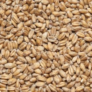 Солод пшеничный Viking Malt (Финляндия) 1 кг.